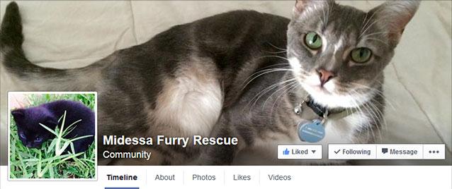 midessa furry rescue