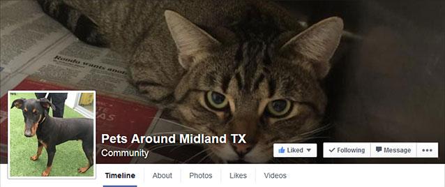 pets around midland